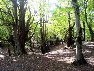 جنگل - پاییز 88 - آمل